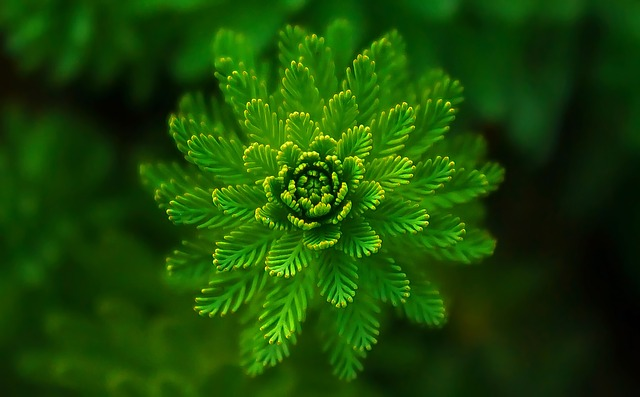 water-plant-821293_640